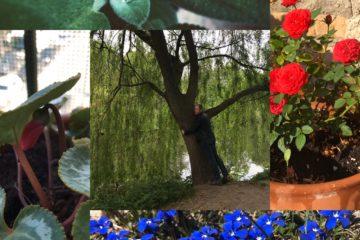 Flors que representen el creixement personal